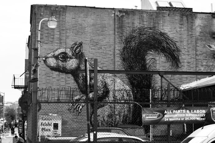 squirrel graf