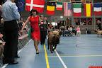 20130511-BMCN-Bullmastiff-Championship-Clubmatch-1886.jpg