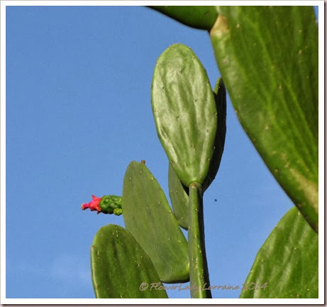 01-14-cactus-flower