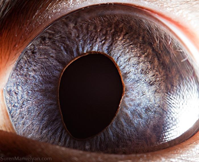 animal-eyes-14