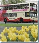 bh_bus_tulips