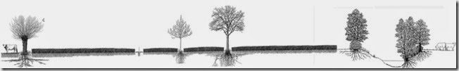 bandeau-agroforesterie-dessin-parcelle-trogne-noyers-ripisylve