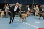 20130510-Bullmastiff-Worldcup-0672.jpg