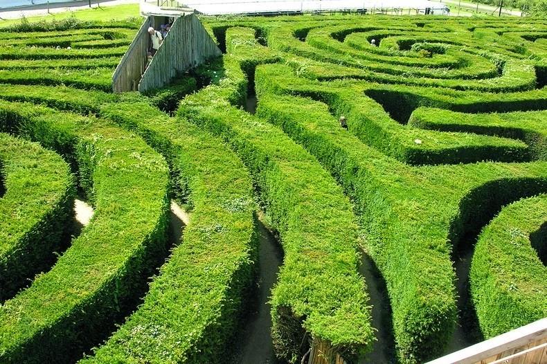 longleat-hedge-maze-5
