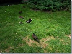 2011.07.26-005 canards
