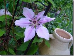 garden 034