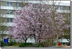 Warwick University D3100  16-03-2012 13-42-33