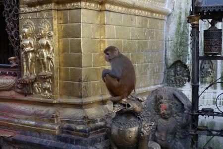 Maimuta la monkey temple Kathmandu