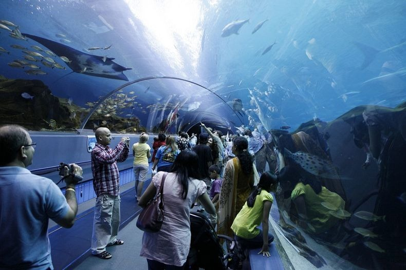 georgia-aquarium-8
