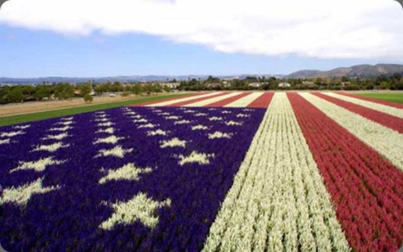 flag floral2