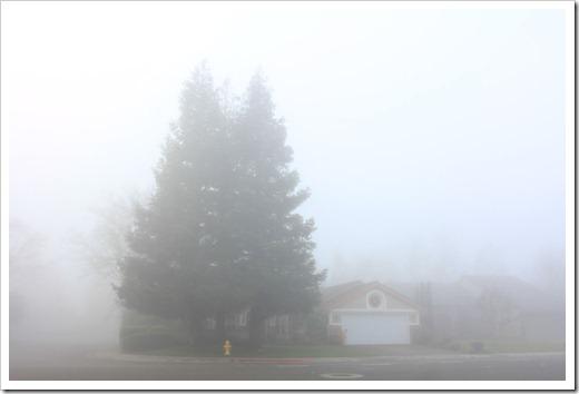 121211_fog_45