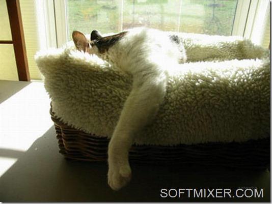 slp_cats_57