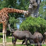 Safaripark_130527-003.JPG