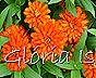 Glória Ishizaka -   Kyoto Botanical Garden 2012 - 83
