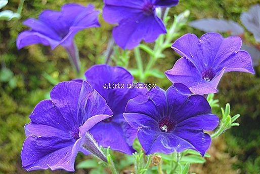 Azul - Glória Ishizaka 15