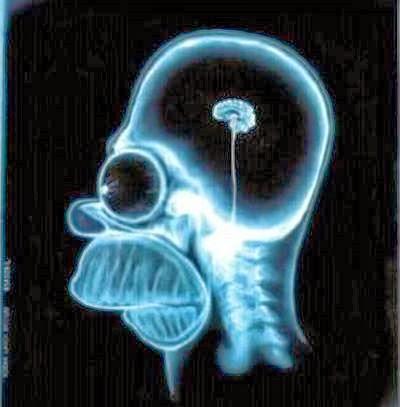 6 curiosidades cérebro