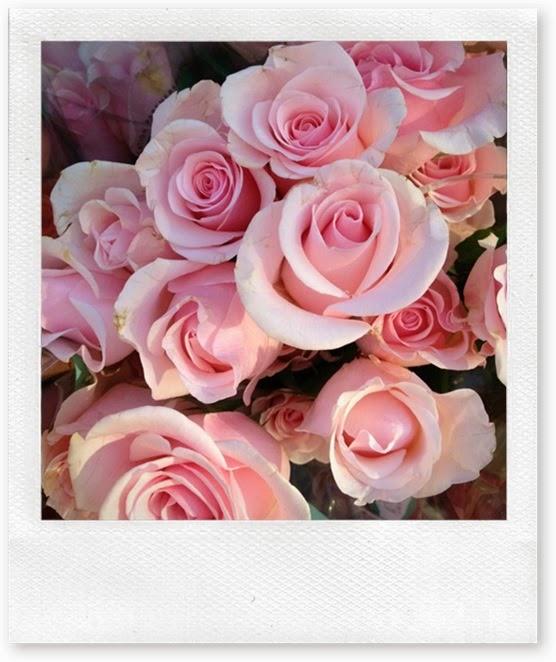 rosas delicadas primaveris