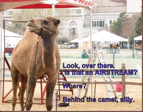 camel and airstream.