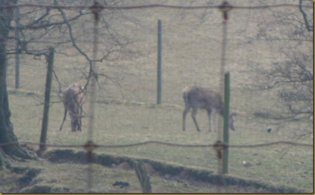 SAM_5082 Deer Park