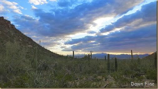 Saguaro NP West_069