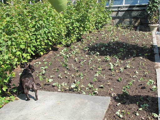 Sharkey, this newly planted bed looks like it has plenty of room to grow.
