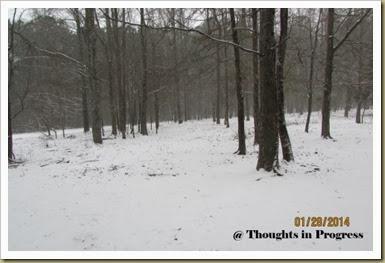Pasture in snow 2014