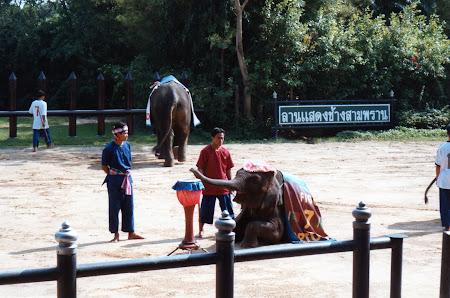 Imagini Thailanda: spectacol elefanti