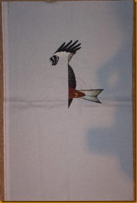 Kite 030711