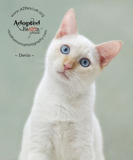 Thanks to the efforts of great photographers and other artist's who volunteer their time through HeArtsSpeak.org, sweet kitties like Devin and others now have loving permanent homes!