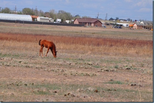 05-09-13 horses 08