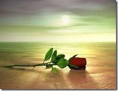 rosa_no_deserto1