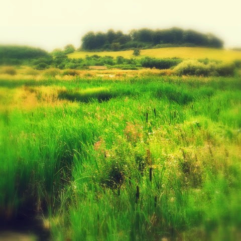 lush green growth of water meadows