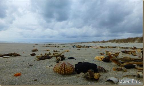 North beach  _094