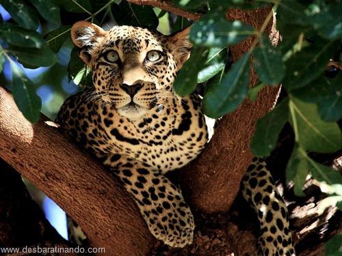 animais national geographic desbaratinando  (24)