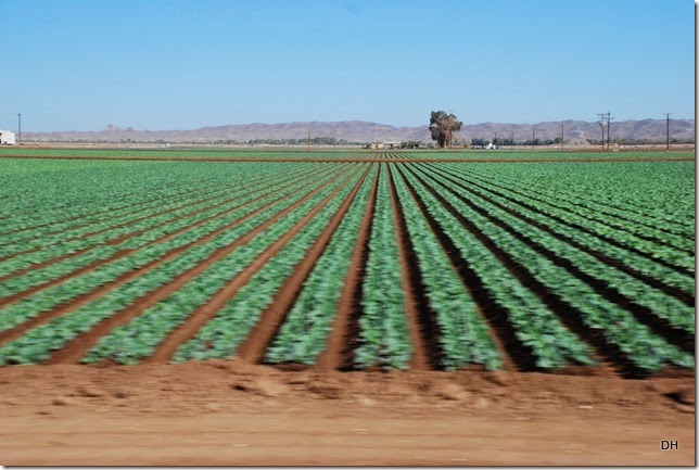 10-24-14 A Travel Parker to Yuma US95 (57)