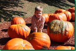 Ty pumpkin