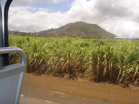 16. plantatie de trestie de zahar in drum spre Port Louis.JPG