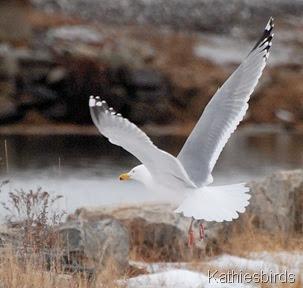 7. flyaway-kab