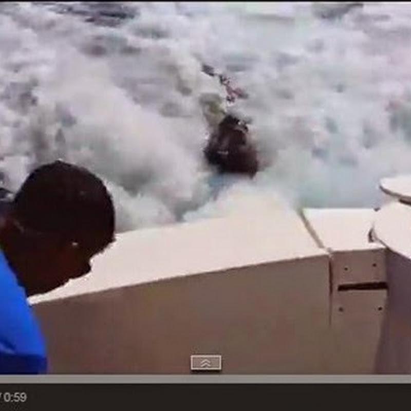 Θαλάσσιο λιοντάρι ανεβαίνει στη βάρκα