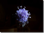 scabious experiment