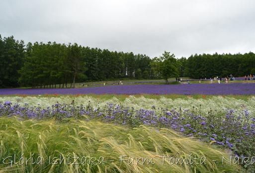 Glória Ishizaka - Farm Tomita 67