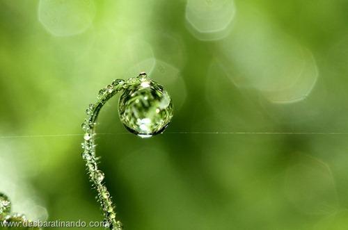 gotas de agua em macro desbaratinando  (1)