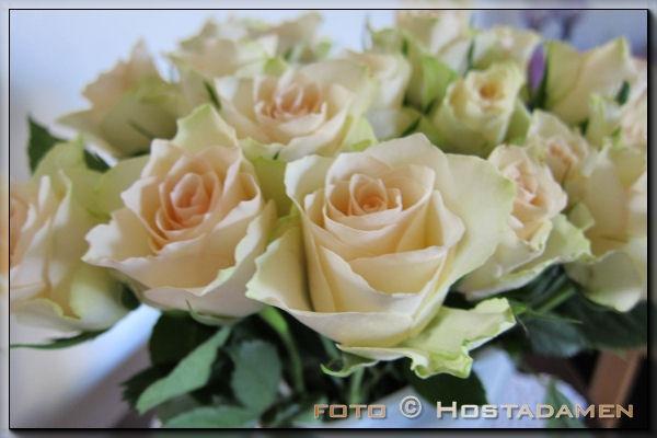 roser_01