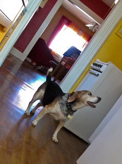 Beagle Arrival (1)