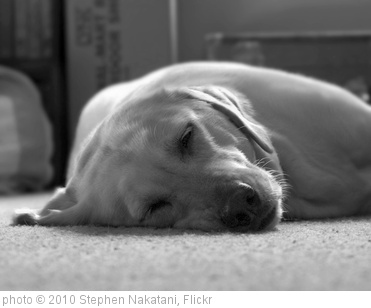 'Lazy Dog' photo (c) 2010, Stephen Nakatani - license: http://creativecommons.org/licenses/by/2.0/