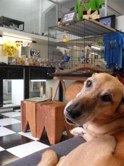 Loja de adoção de cães e outros animais em São Paulo.