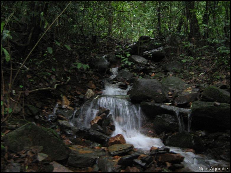 Near Agumbe