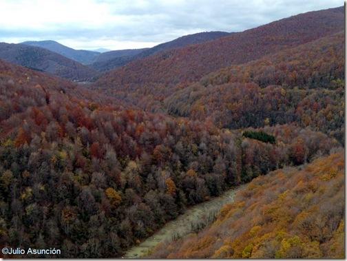 Hayas y robles desde el mirador de Ariztokia - Valle de Aezkoa - Navarra