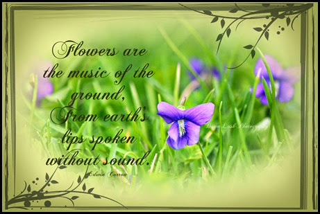 FlowersAreMusicViolets