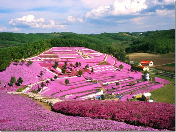 pink-park-japan-16